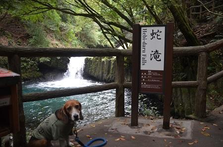 20141027河津七滝③蛇滝08