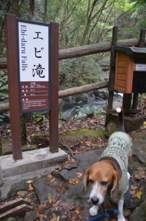 20141027河津七滝④エビ滝05