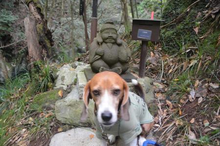 20141027河津七滝④エビ滝03