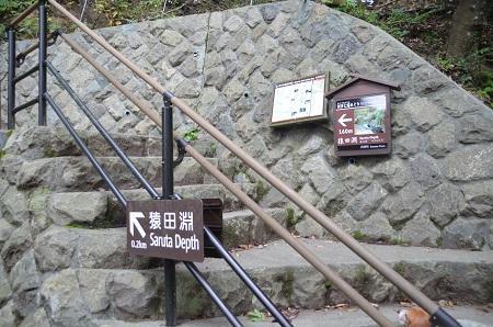 0141027河津七滝番外編 猿田淵05