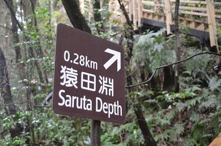 20141027河津七滝番外編 猿田淵01