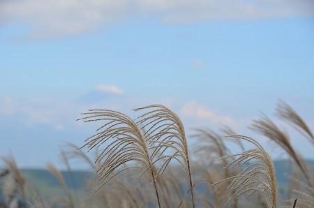 20141028 巣雲山20