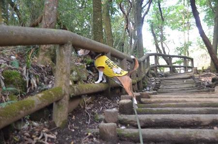 20141028 賜箱根公園05