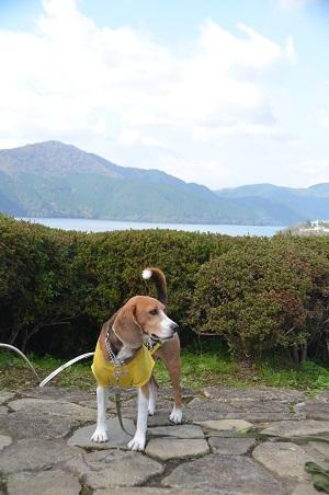 20141028 賜箱根公園15