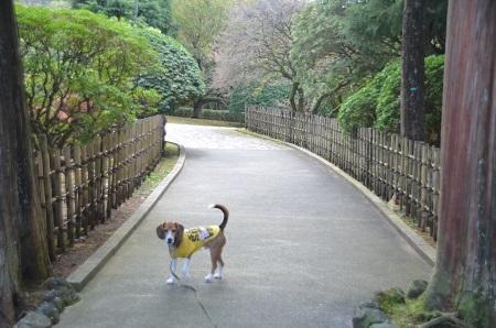 20141028 賜箱根公園25