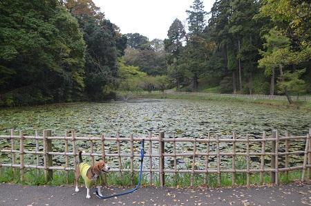 20141102佐倉城址公園06