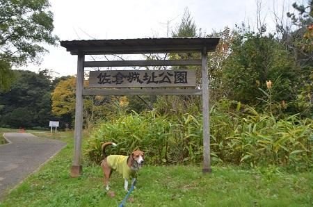 20141102佐倉城址公園04