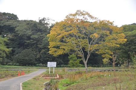 20141102佐倉城址公園05
