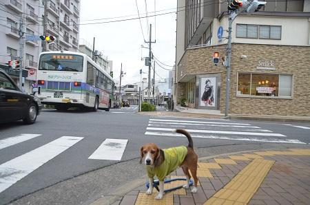 20141102佐倉城址公園03