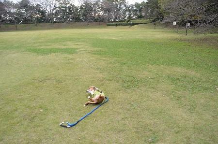 20141102佐倉城址公園11