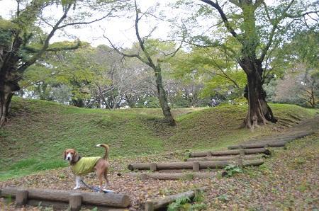 20141102佐倉城址公園10