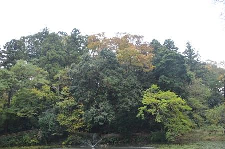 20141102佐倉城址公園09