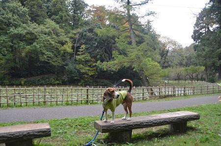 20141102佐倉城址公園07