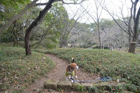 20141102佐倉城址公園17