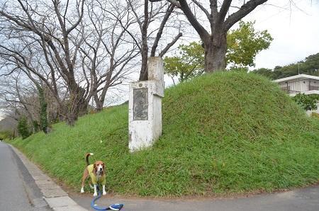 20141102佐倉城址公園30