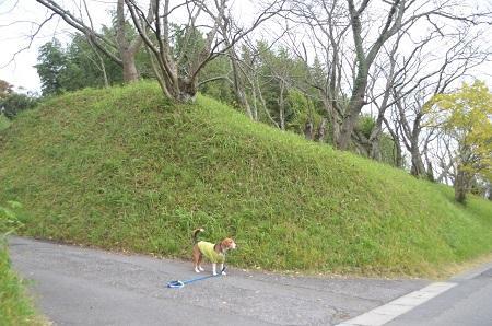 20141102佐倉城址公園29