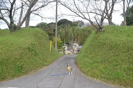 20141102佐倉城址公園28