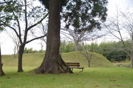 20141102佐倉城址公園26