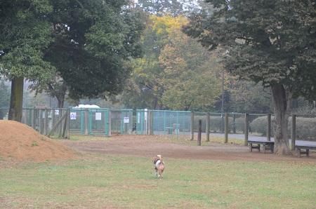 20141112北総ドッグラン05
