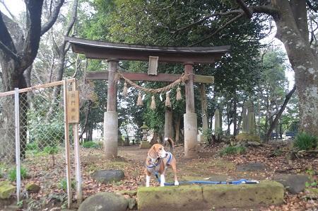 20141112将門神社05