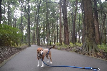 20141112五本松公園06
