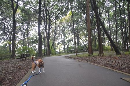 20141112五本松公園04