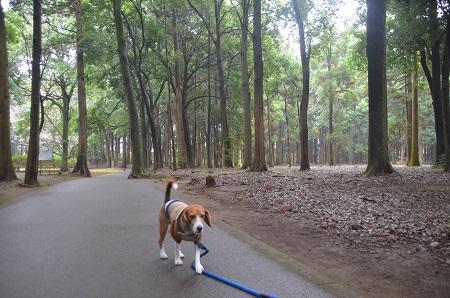 20141112五本松公園03