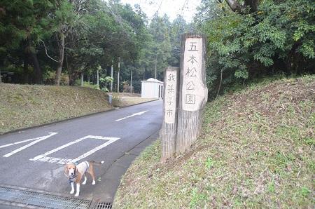 20141112五本松公園01