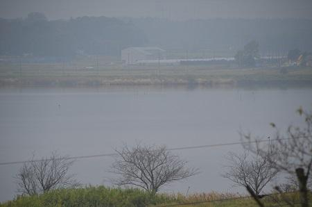 20141112五本松公園10