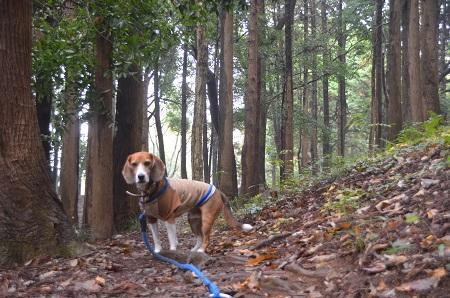 20141112五本松公園17