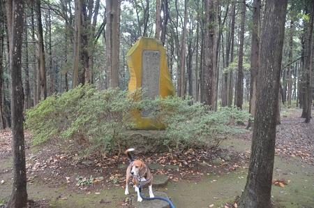 20141112五本松公園13