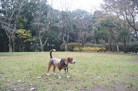 20141112五本松公園24