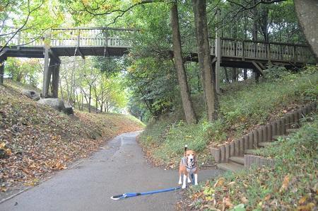 20141112五本松公園21