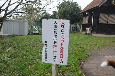 20141112五本松公園20
