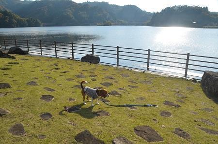 20141121亀山湖・亀山ダム24