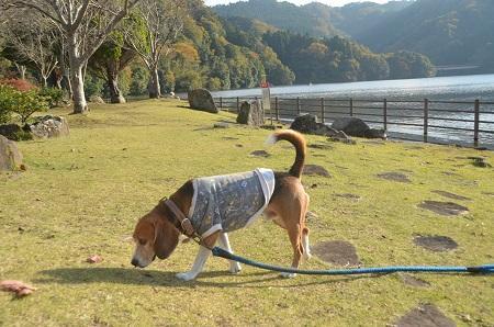 20141121亀山湖・亀山ダム26