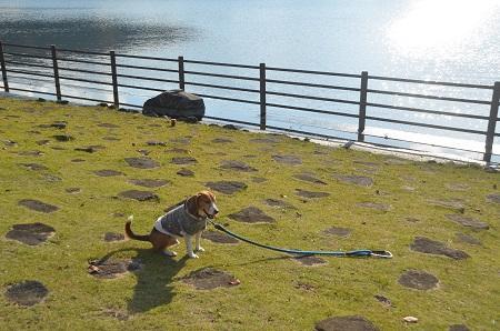 20141121亀山湖・亀山ダム25