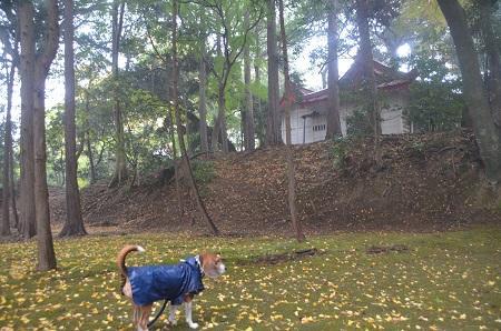 20141125韮山城址16