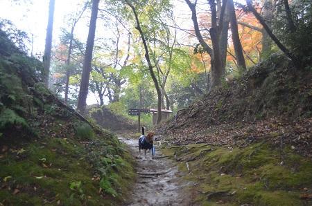 20141125韮山城址21