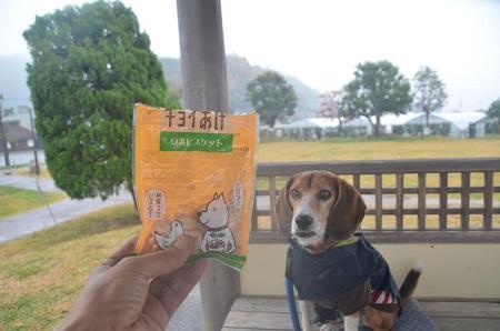 20141125蛭ヶ小島11