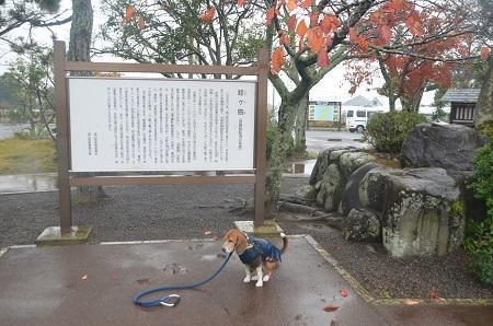 20141125蛭ヶ小島18