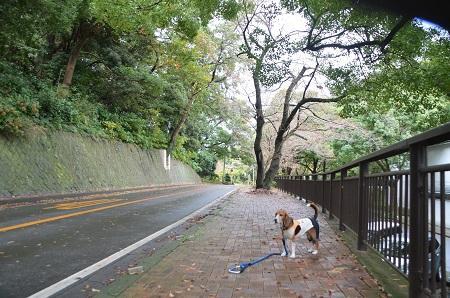 20141126お林展望公園03