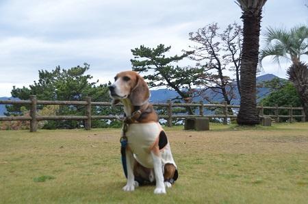 20141126お林展望公園25