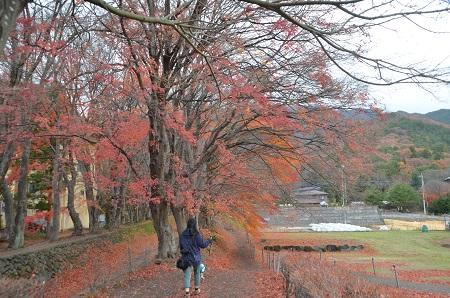 20141130河口湖紅葉の回廊05