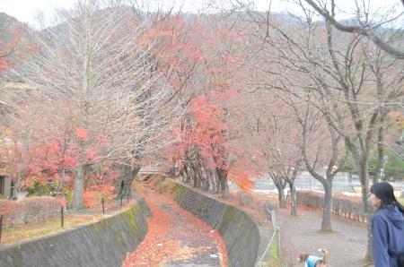 20141130河口湖紅葉の回廊04