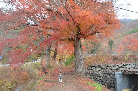 20141130河口湖紅葉の回廊13