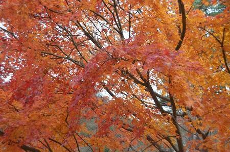 20141130河口湖紅葉の回廊19