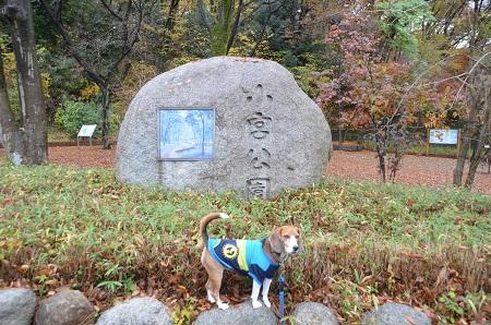 20141201小宮公園01