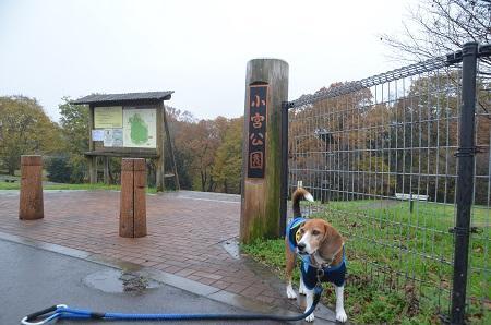 0141201小宮公園21