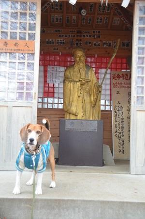 20141130河口湖黄金の七福神巡り11
